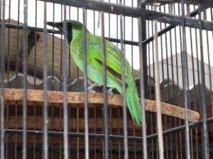 FOTO KOLEKSI BURUNG YANG DIJUAL « Libertybirdfarm's Bl